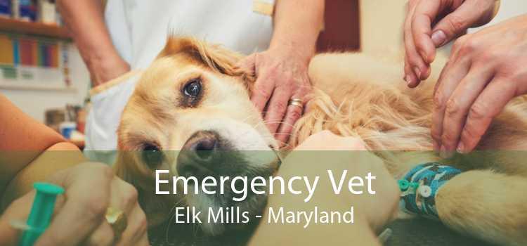 Emergency Vet Elk Mills - Maryland