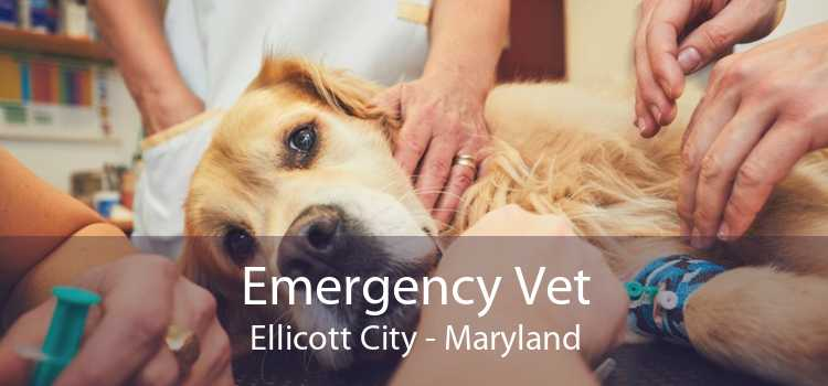 Emergency Vet Ellicott City - Maryland