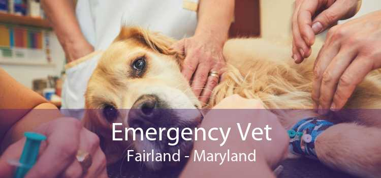 Emergency Vet Fairland - Maryland