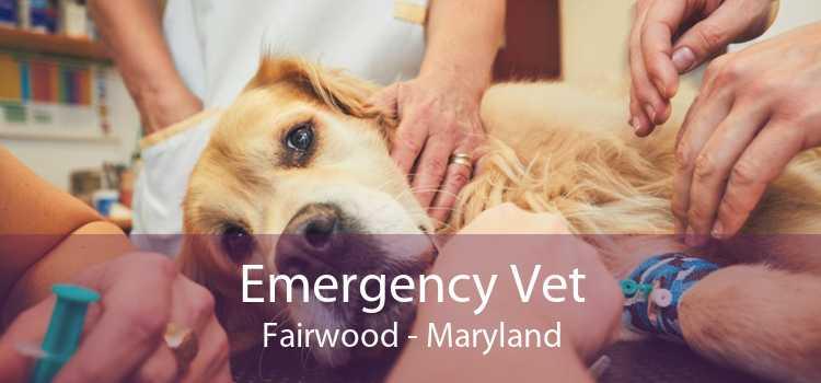 Emergency Vet Fairwood - Maryland