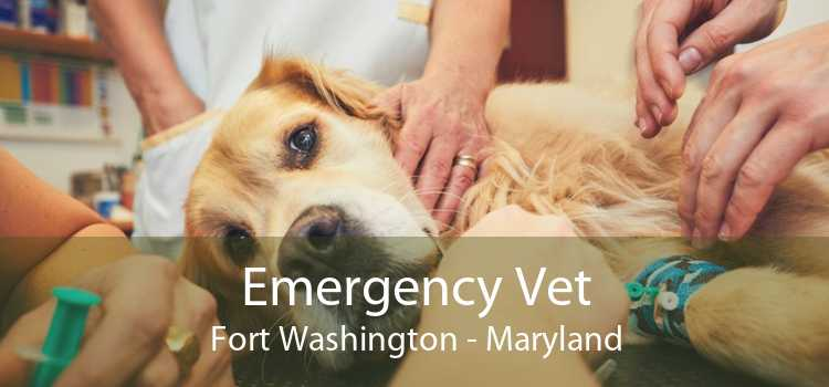 Emergency Vet Fort Washington - Maryland