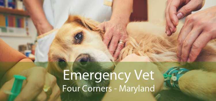 Emergency Vet Four Corners - Maryland