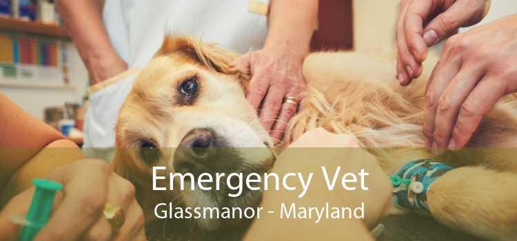 Emergency Vet Glassmanor - Maryland