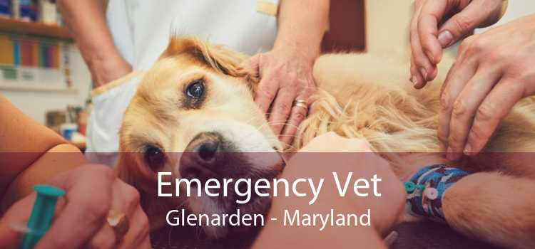 Emergency Vet Glenarden - Maryland