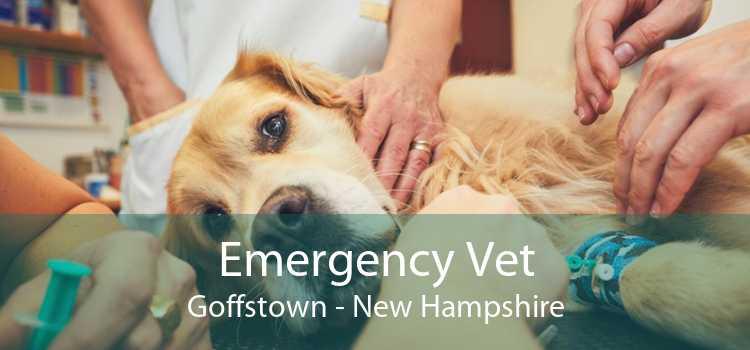 Emergency Vet Goffstown - New Hampshire