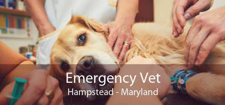 Emergency Vet Hampstead - Maryland