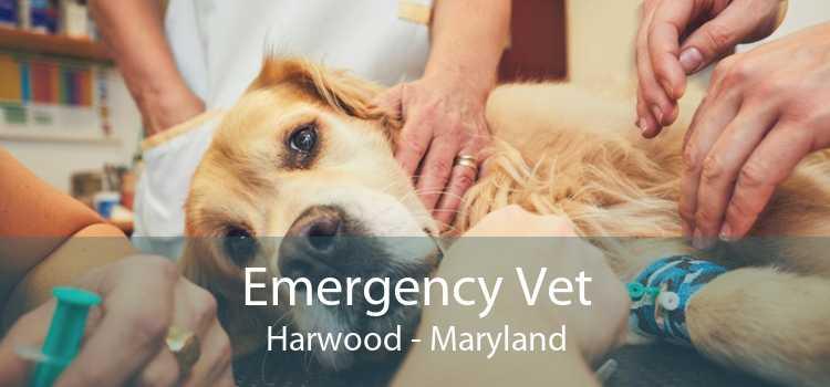 Emergency Vet Harwood - Maryland
