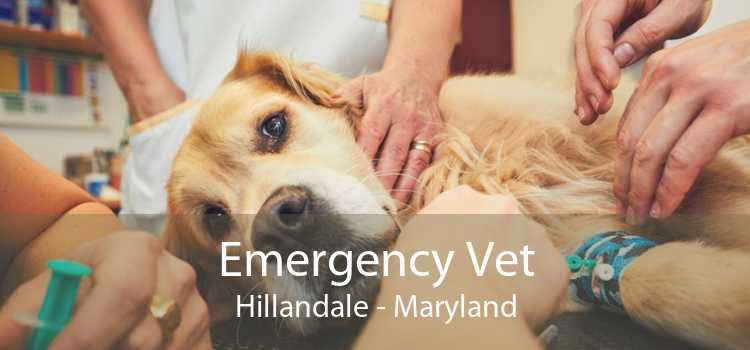 Emergency Vet Hillandale - Maryland