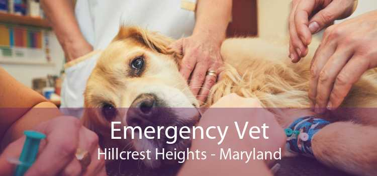 Emergency Vet Hillcrest Heights - Maryland
