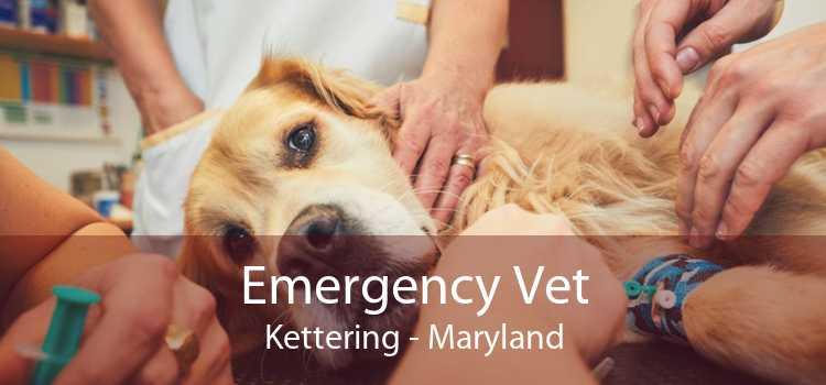 Emergency Vet Kettering - Maryland