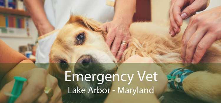 Emergency Vet Lake Arbor - Maryland