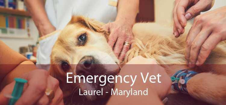 Emergency Vet Laurel - Maryland