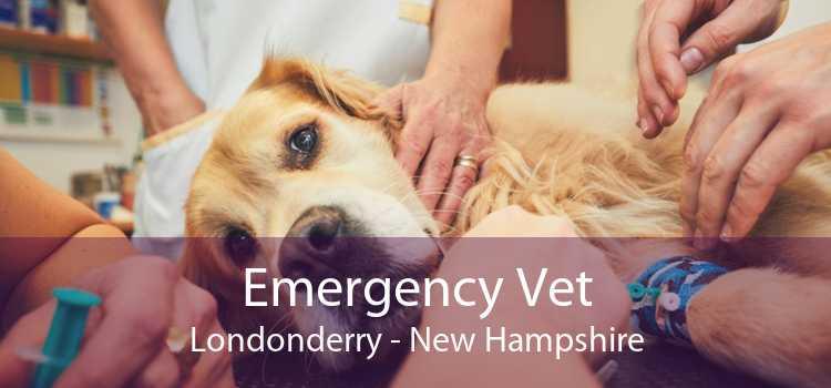 Emergency Vet Londonderry - New Hampshire