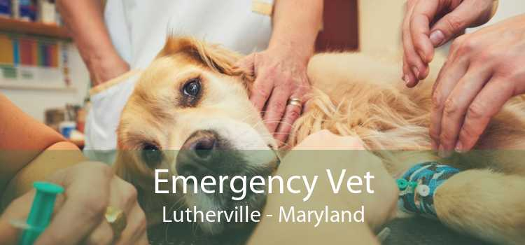 Emergency Vet Lutherville - Maryland
