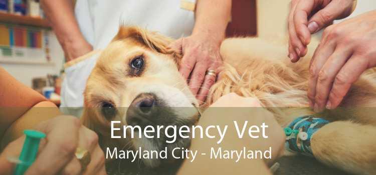 Emergency Vet Maryland City - Maryland