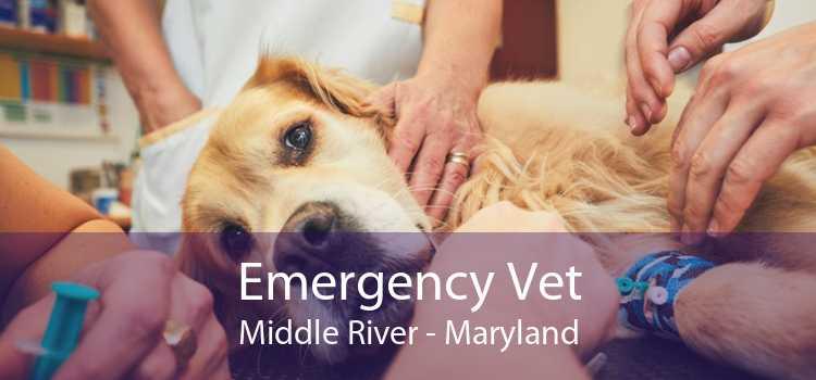 Emergency Vet Middle River - Maryland
