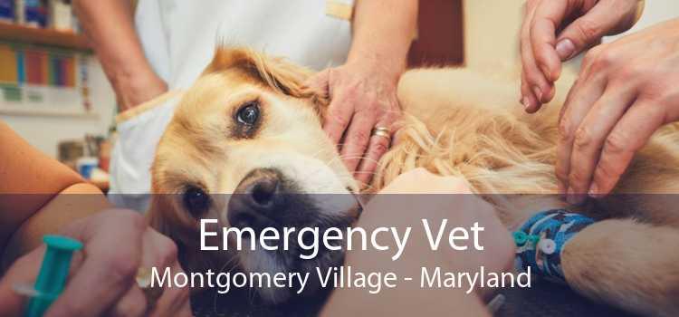 Emergency Vet Montgomery Village - Maryland
