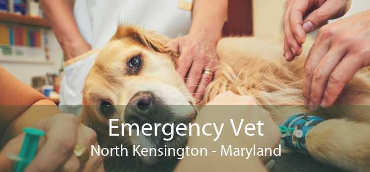 Emergency Vet North Kensington - Maryland