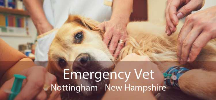 Emergency Vet Nottingham - New Hampshire