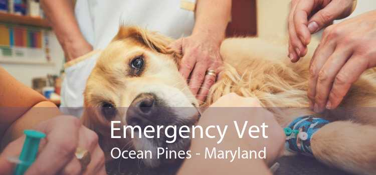 Emergency Vet Ocean Pines - Maryland