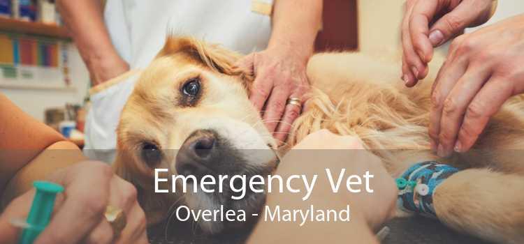 Emergency Vet Overlea - Maryland