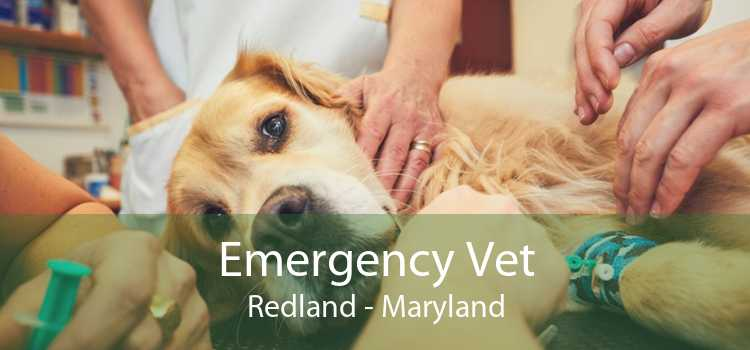 Emergency Vet Redland - Maryland