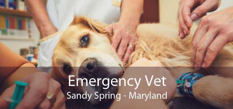 Emergency Vet Sandy Spring - Maryland