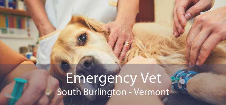 Emergency Vet South Burlington - Vermont