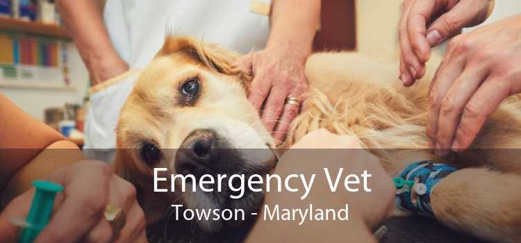 Emergency Vet Towson - Maryland