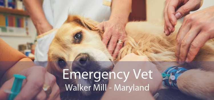 Emergency Vet Walker Mill - Maryland