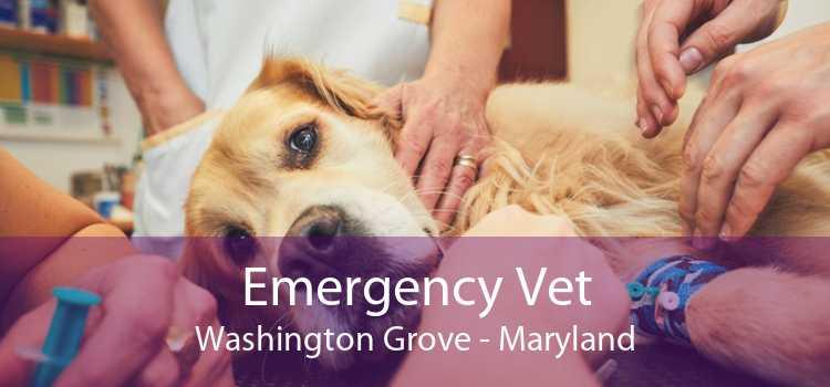 Emergency Vet Washington Grove - Maryland