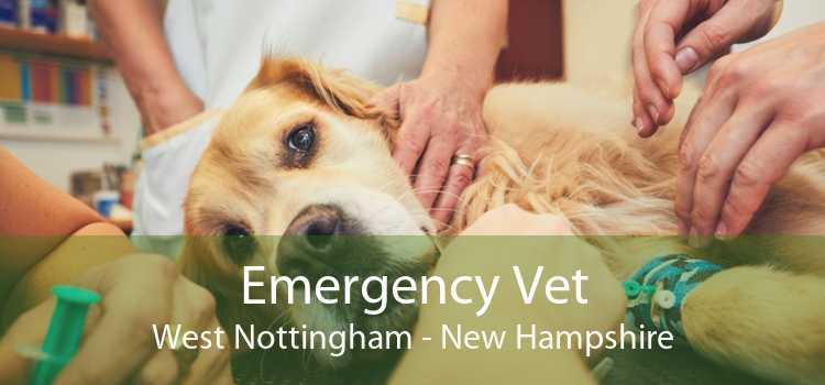 Emergency Vet West Nottingham - New Hampshire