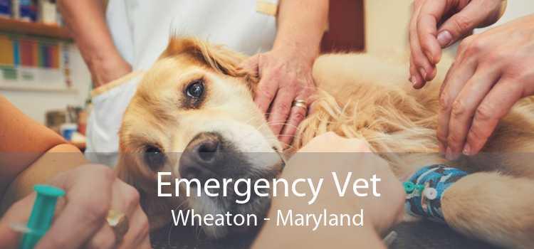 Emergency Vet Wheaton - Maryland