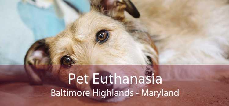 Pet Euthanasia Baltimore Highlands - Maryland