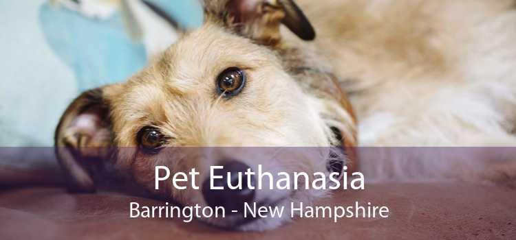 Pet Euthanasia Barrington - New Hampshire