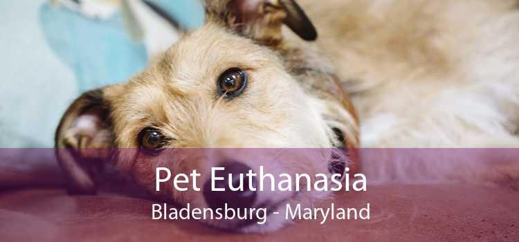Pet Euthanasia Bladensburg - Maryland