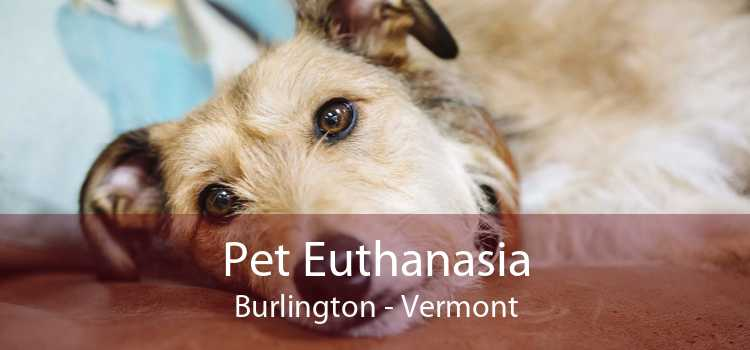 Pet Euthanasia Burlington - Vermont