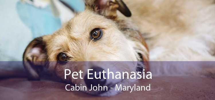 Pet Euthanasia Cabin John - Maryland