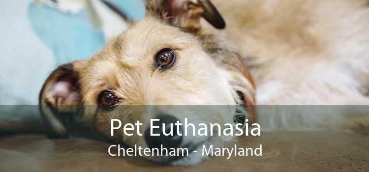 Pet Euthanasia Cheltenham - Maryland