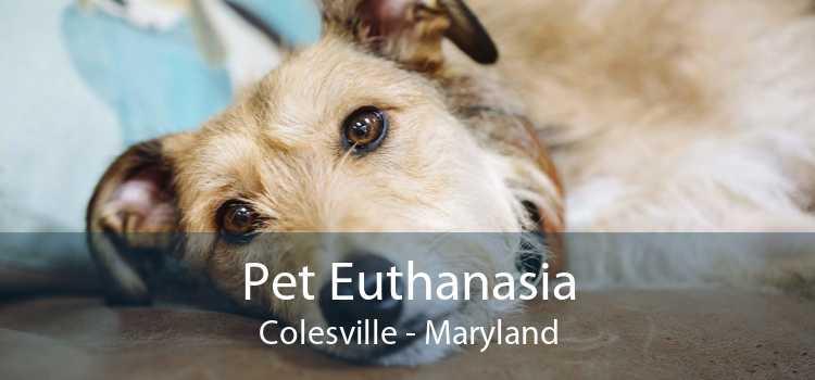Pet Euthanasia Colesville - Maryland