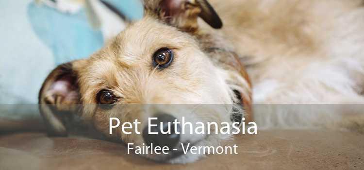 Pet Euthanasia Fairlee - Vermont