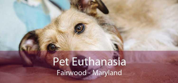 Pet Euthanasia Fairwood - Maryland
