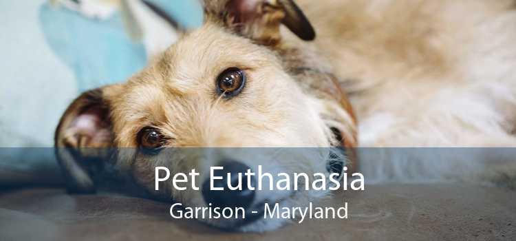 Pet Euthanasia Garrison - Maryland