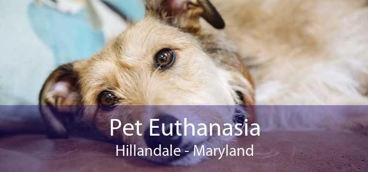 Pet Euthanasia Hillandale - Maryland