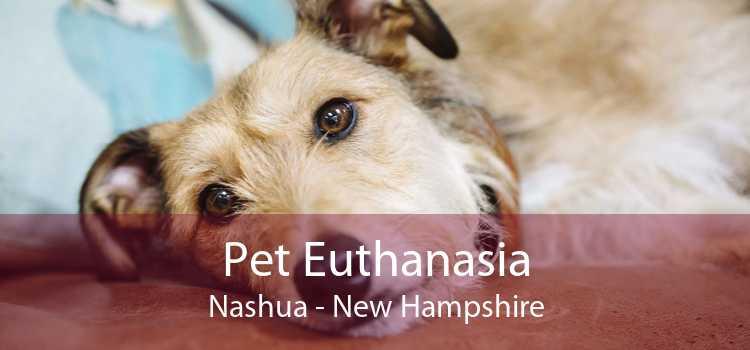 Pet Euthanasia Nashua - New Hampshire