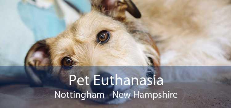 Pet Euthanasia Nottingham - New Hampshire