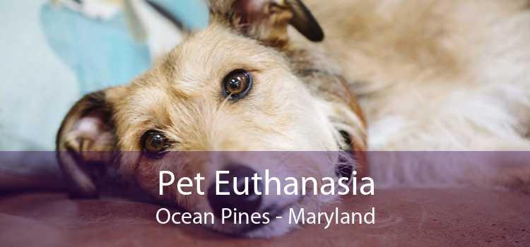 Pet Euthanasia Ocean Pines - Maryland