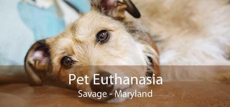 Pet Euthanasia Savage - Maryland