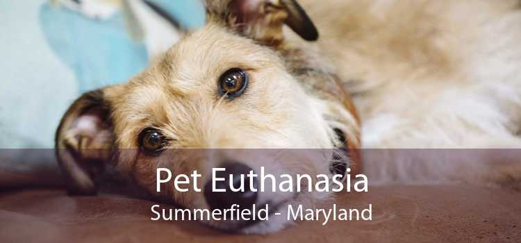 Pet Euthanasia Summerfield - Maryland