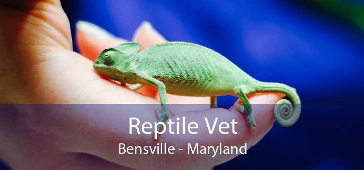Reptile Vet Bensville - Maryland